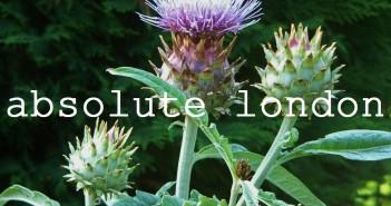 ablon #4 thistle