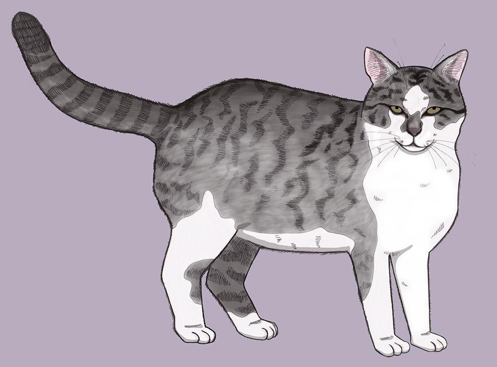 th_a cat