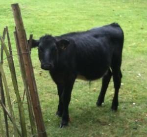牧草を食べるのではなかったっけ…?