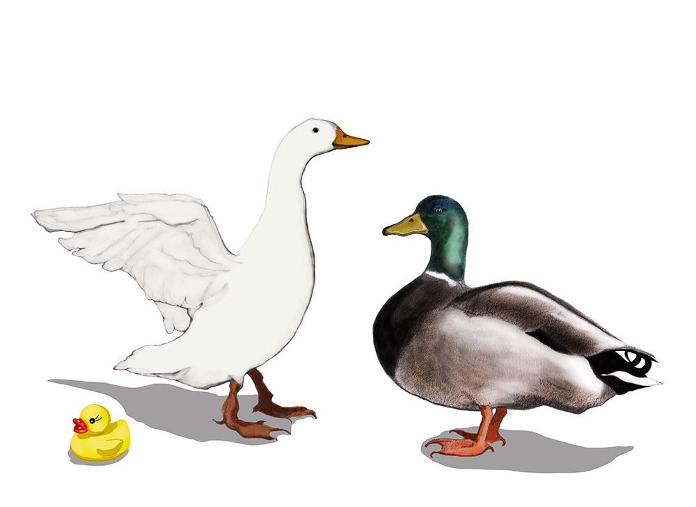 th_ducks