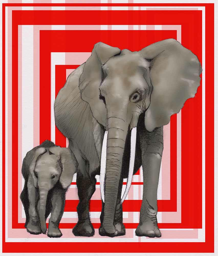 th_elephants