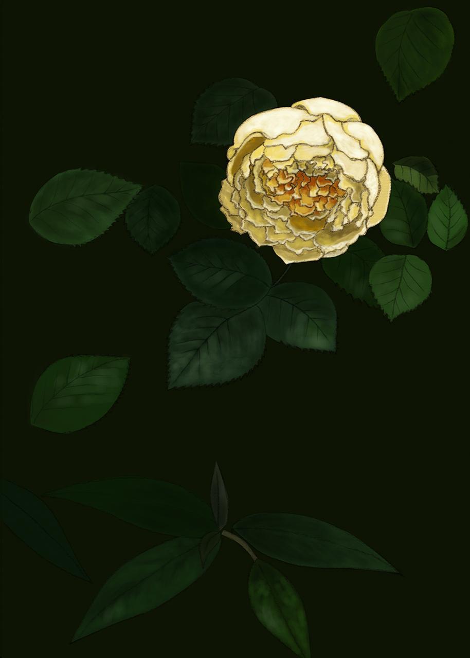 th_rose