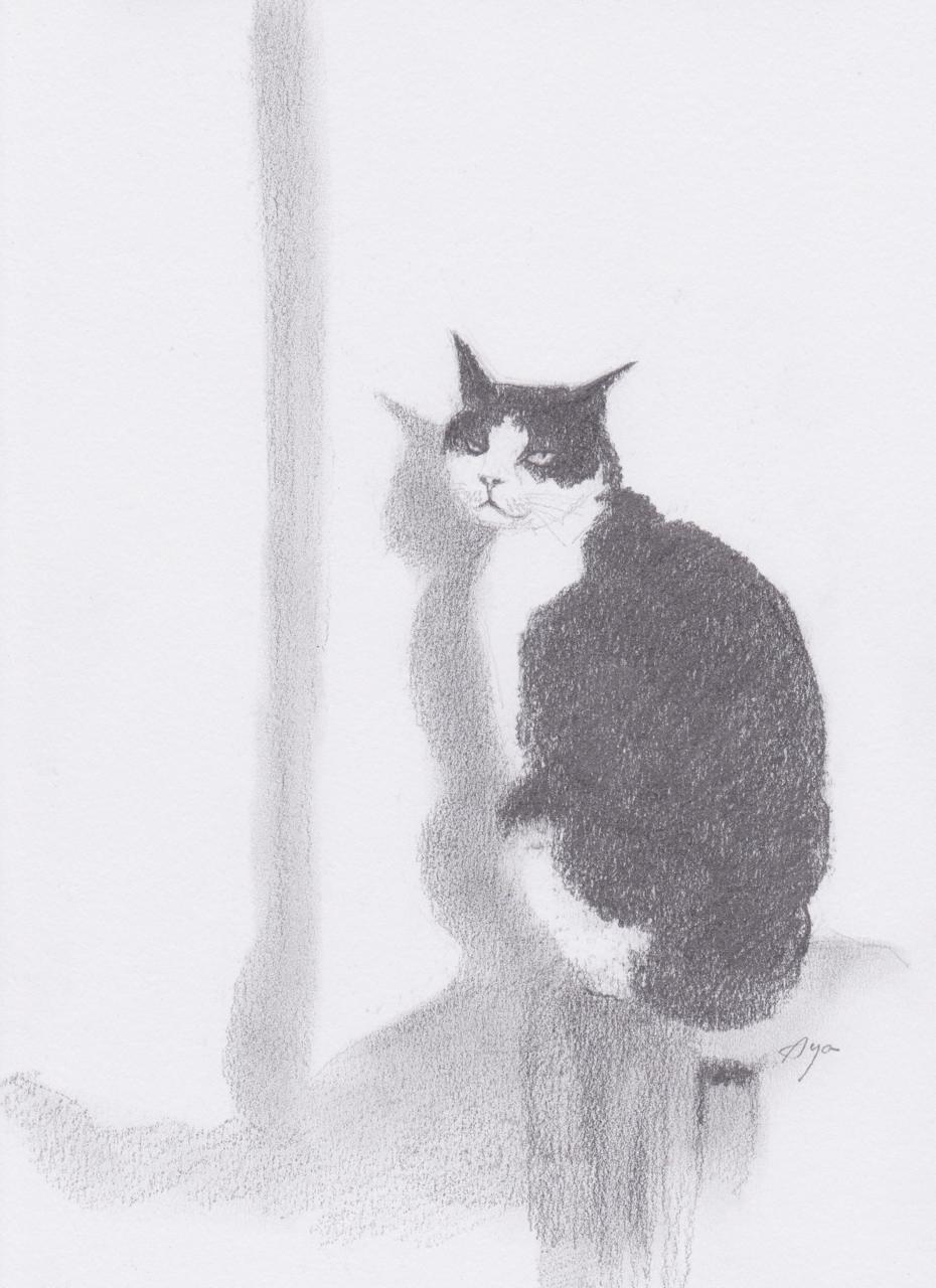 th_cat3