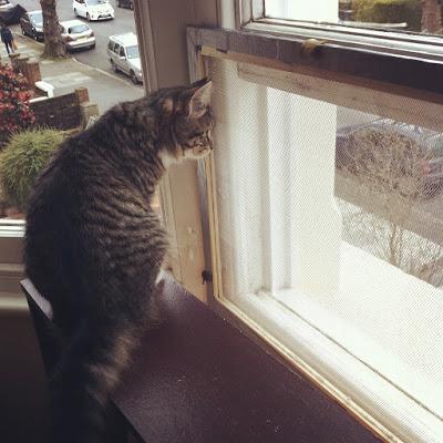 メッシュボード越しに外の様子を眺めるタムタム
