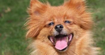 dog_smile