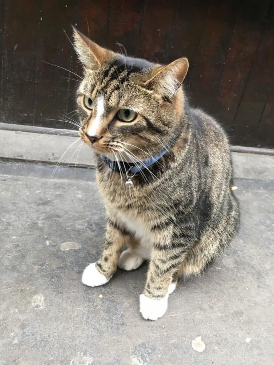 ロンドンのセントラルエリア、Soho界隈のニュースエージェントの前で見かけたタビー。首輪をしているので、界隈のお店の飼い猫でしょう。何をじっと見ているのかと思って目線を追うと、その先にはハトがいたのでした。でも飛びかかる様子はなさそうでした。やはりそこは都会の猫なのか。