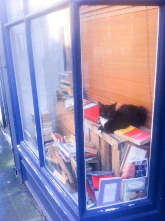 こちらもDeptfordにて。かつて古書店として営業していたのか、ウィンドーに古本がドサッと雑多に置かれていて、ここを通るたびにその中でこの子を含む猫数匹がよく探検したりくつろいだりしていた。先日通ったら骨董品店として営業していてウィンドーは模様替えされており、猫たちの姿は見えませんでした。