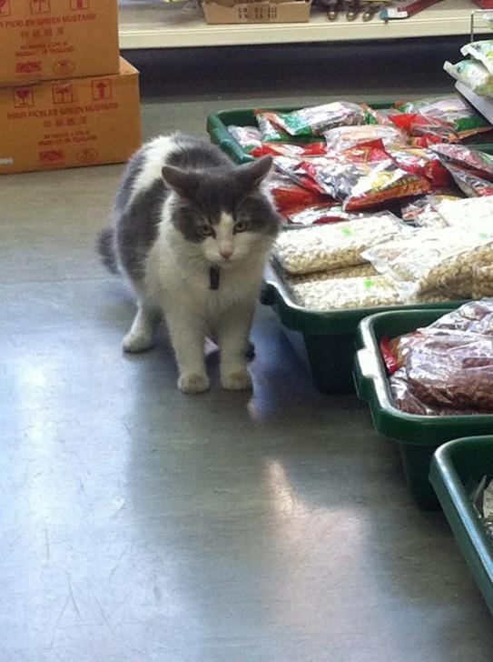 Deptfordの中国食材店にて、ふと気づくと店内をウロウロしていた猫。大きくてふわふわ、グレー×白の毛皮がやわらかい印象で触りたくなるけど、近寄るとふいっと歩いて行ってしまって触らせてはくれませんでした。