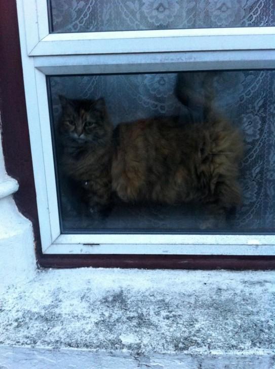 こちらもある日そのスタジオから帰る途中に、とあるお宅の窓際で見かけたフラッフィーな猫ちゃん。外を眺めている様子が物憂げな感じですが、尻尾が上がっているところを見ると「ハロー!」と言っていたのかも。