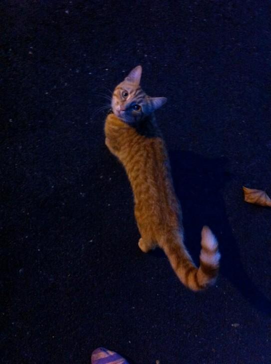 少し前の写真ですが、夏の夜に近所の公園まで散歩に出た時に出会った子猫。あどけない感じで人なつこく、離れがたかったですねー。