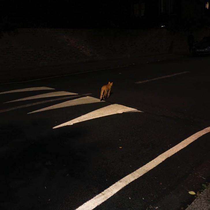 最後は、これまた近所で夜の散歩中に出会ったジンジャーキャット。近くのフラットの2階から、飼い主と思われる人がこの猫に向かって何度も「おうちに戻っておいでー」と呼びかけていたけれど、その声が届いているのかどうなのか、本人はお楽しみはこれからとばかり、ひとり夜の闇に消えていくのでした......。