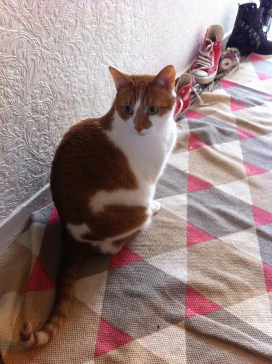 私がベースで参加しているFlemmingsというバンドのツアーで訪れたバーミンガムで、その日に泊めてもらった友人バンドのフラットで飼っていた猫。残念ながら名前は失念してしまいましたが、とてもフレンドリーで従順な猫ちゃんでした。このフラットには確か3、4人が住んでいて、もう1匹黒猫がいたほか、庭のケージではうさぎやモルモットも数匹飼われていて、ケージの中で守られているとはいえども、よく猫とうまく共同生活してるなあと感心しました。