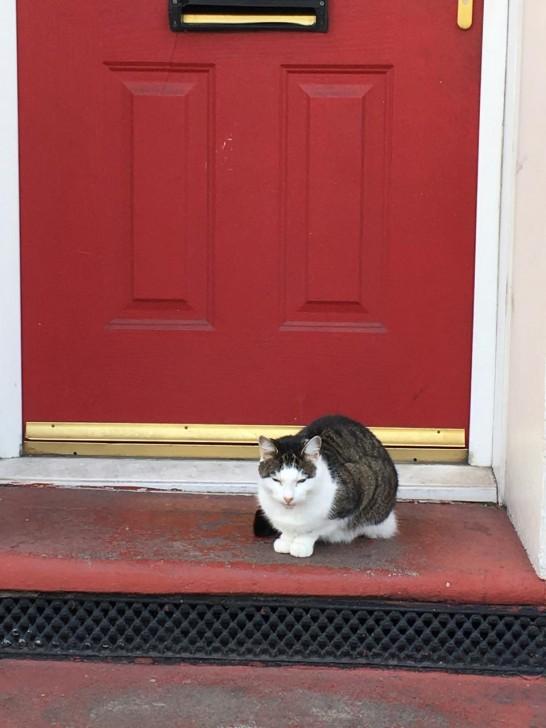サウスイースト・ロンドンで散歩中に出会った猫。この赤い扉のおうちがおそらくご自宅かと思いますが、ドアの前でこのようにじーっと静かに目を細めて座り、日なたぼっこ中でした。まるでオカッパというか、髪型をマッシュに整えたかのような風貌がとても印象的なのでありました。