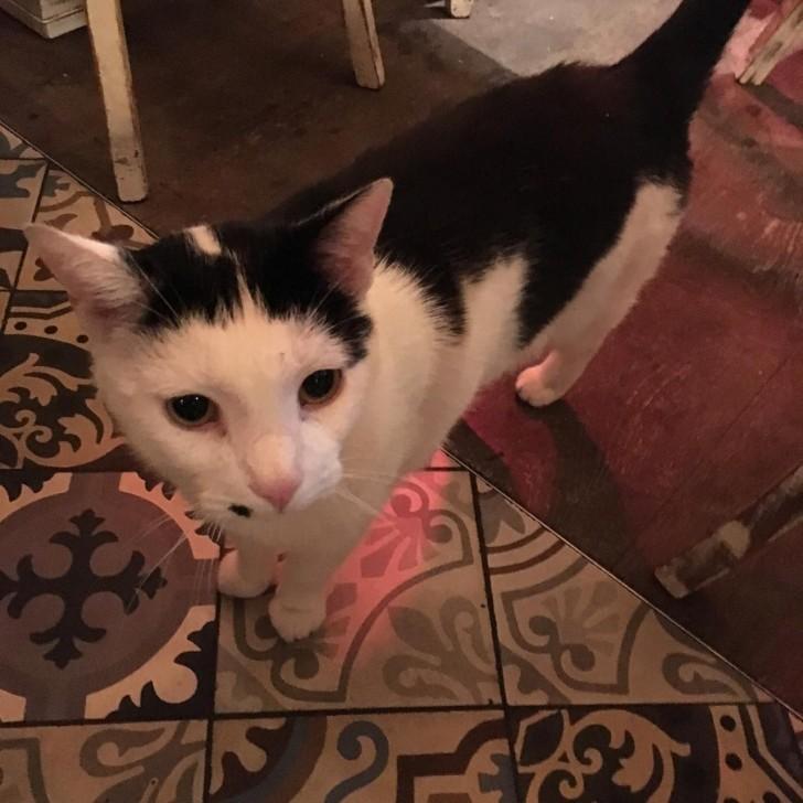 ブロードウェイ・マーケットのタパス料理店El Gansoでご飯を食べていたら、お店にフラフラと入ってきた、鼻の下のほくろがかわゆいこの子。確か斜め向かいのパブThe Cat & Muttonの飼い猫で、名前が、何だっけなあ、「ボス」とか「社長」みたいな呼ばれ方をしてたと思うんだけど、すっかり忘れてしまいました(どなたかご存知の方、情報お願いします!)。