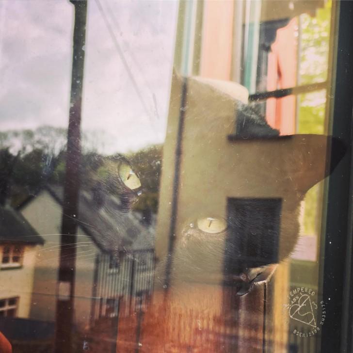 ウェールズはCarmarthenshireの風光明媚な町、Laugharne にて。街へ向かう通り沿いの住宅の窓越しに、ふと目が合ったこの黒猫を撮影したら、風景がガラスに写り込んで、どことなく童話的な雰囲気の写真になりました。
