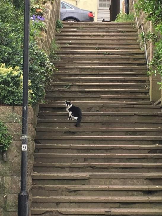 イースト・サセックスはヘイスティングスにて。ここでは数日間の滞在中、圧倒的に犬をいっぱい見かけて、猫は数えるほどでした。それだけに写真もこのように遠巻き。田舎に行けば行くほど犬を飼っているお宅が多いように思いますが、そのせいもあるのか、道端で猫をよく見かけるのって都会のほうが多いような。やはり仕事の関係とか住宅事情などで、都会は猫を選ぶ人が多いということなんですかね。
