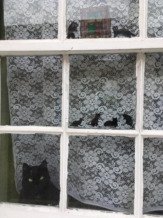 ブライトンの住宅街にて。窓枠にあしらわれた、かわいらしい飾りが目を引きますねー…と、そうです、一番下のは本物です。いつもこうやって、道ゆく人を楽しませているに違いない。それにしてもディスプレイの小さな猫にそっくりですね、お見事(笑)。