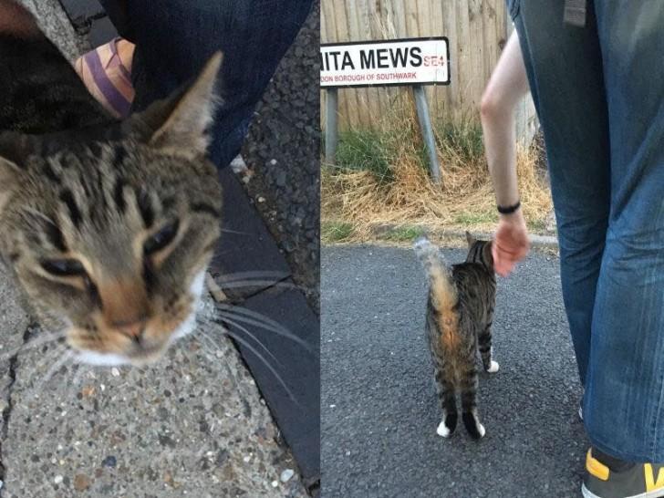 ある日の夕方、Nunhead Cemetary界隈を散歩していたら、どこからともなく現れたタビーキャット。とてもフレンドリーで私たちの足のまわりをぐるぐる、すりすり。親しみを覚える面長な顔立ち、すらりとしたボディに脚長&小股が切れ上がったスタイルの良さで、どことなく和な雰囲気(笑)。面長の猫ってたま〜に見かけますが、独特の愛嬌があってこれまたかわいいんですよね。