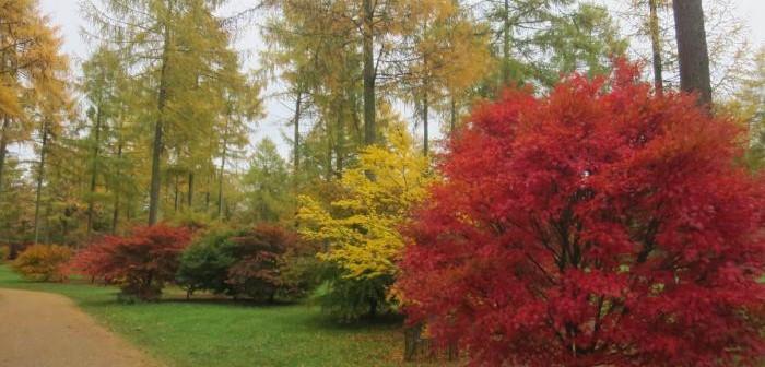 紅葉を見るならWestonbirt Arboretum