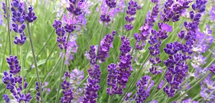 035 | 自然の香りと暮らす